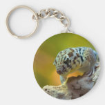 wonder-gecko-2560 keychains