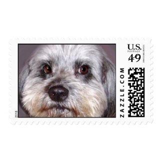 WonderDog Stamp