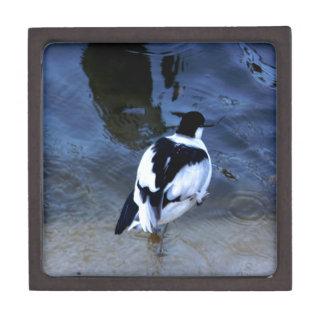 Wonderful Bird Premium Jewelry Boxes