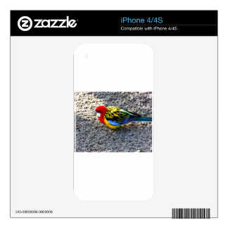 Wonderful Bird Skins For The iPhone 4S