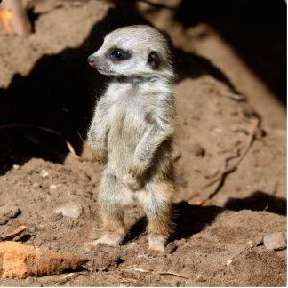 Wonderful Cute Sweet African Meerkat Animal Statuette