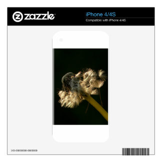 Wonderful Dandelion Decal For The iPhone 4