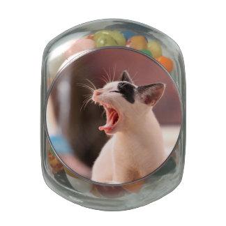 Wonderful Dangerous Cat Jelly Belly Candy Jars