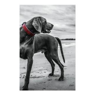 Wonderful Dog Custom Flyer
