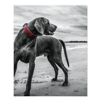 Wonderful Dog Personalized Flyer