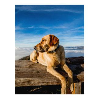 Wonderful Dog Full Color Flyer
