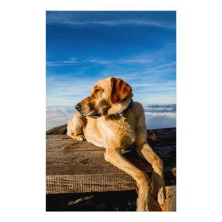 Wonderful Dog Flyer Design