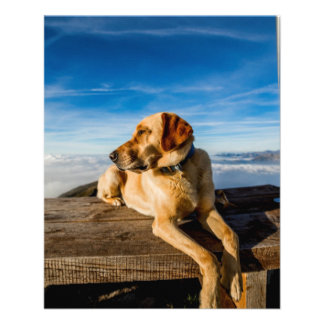 Wonderful Dog Flyers