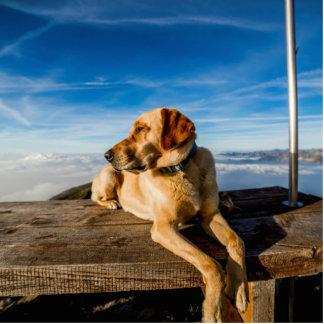 Wonderful Dog Photo Cut Outs