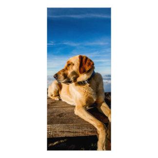 Wonderful Dog Rack Card Template