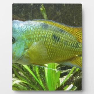 Wonderful fish display plaque