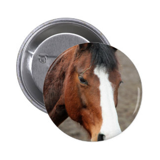 Wonderful Horse Pinback Button