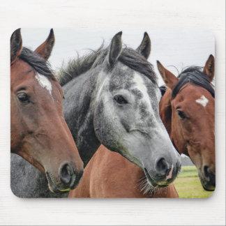 Wonderful Horses Stallion Photography Mouse Pad