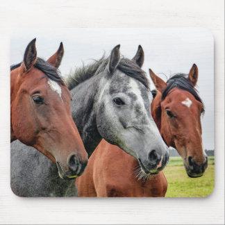 Wonderful Horses Wildlife Ridding Mouse Pad