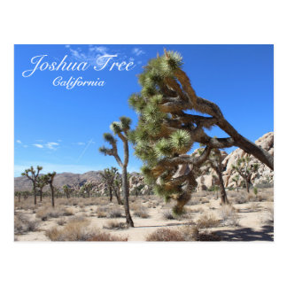 Wonderful Joshua Tree Postcard! Postcard