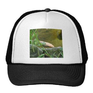 Wonderful Koi Hats