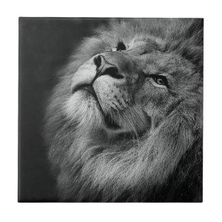 Wonderful Lion Ceramic Tile