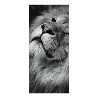 Wonderful Lion Rack Card