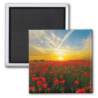Wonderful Poppy Field Sunset Horizon Magnet