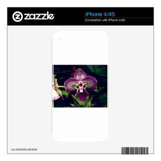 Wonderful Purple Orchid Skin For The iPhone 4