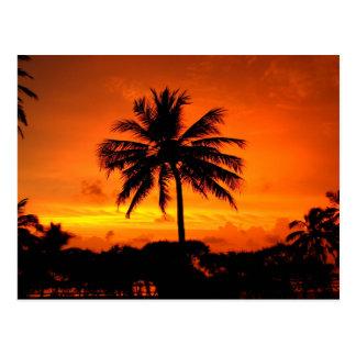 Wonderful Sunset Postcard