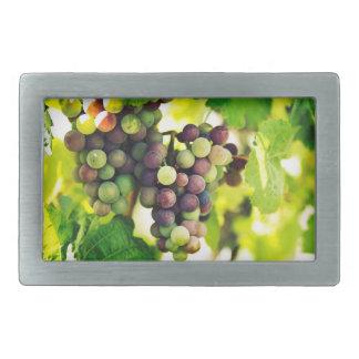 Wonderful Vine Grapes,  Autumn Fall Sun Belt Buckle