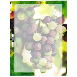 Wonderful Vine Grapes,  Autumn Fall Sun Dry-Erase Board