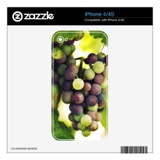 Wonderful Vine Grapes,  Autumn Fall Sun iPhone 4S Skin