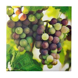 Wonderful Vine Grapes, Nature, Autumn Fall Sun Ceramic Tile