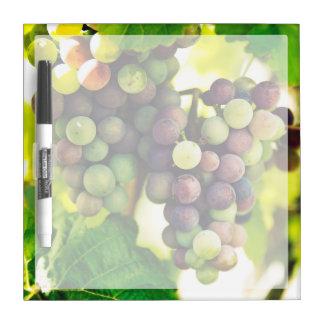 Wonderful Vine Grapes, Nature, Autumn Fall Sun Dry-Erase Board