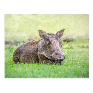 Wonderful Warthog Postcard