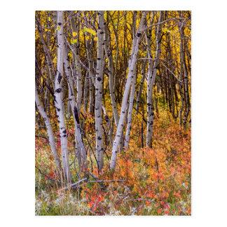Wonderful Woods Wonderland Postcard