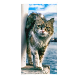Wondering Beautiful Cat Photo Cards