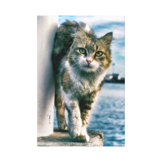 Wondering Beautiful Cat Wrapped Canvas