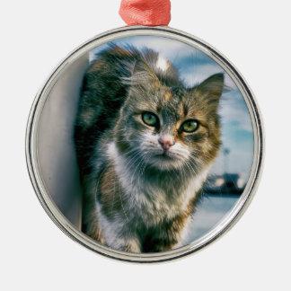 Wondering Cute Cat Premium Round Ornaments