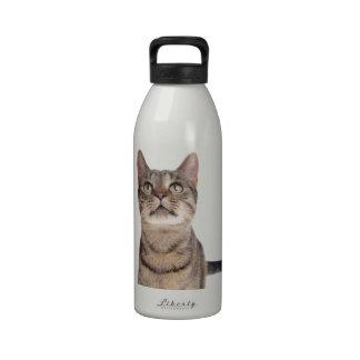 Wondering tabby cat reusable water bottle