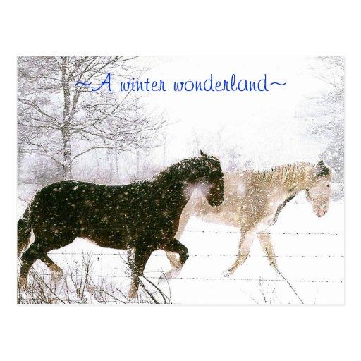 wonderland~ del invierno del ~A Postal