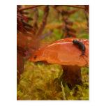 Wonderland Mushroom Post Cards