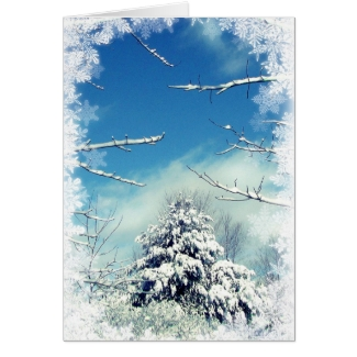Wonderland Winter Solstice