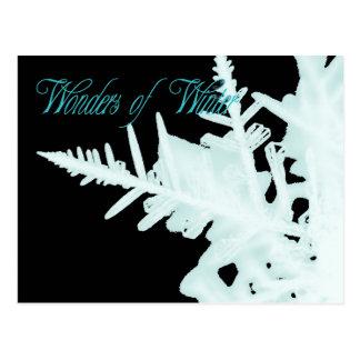Wonders of Winter Postcard