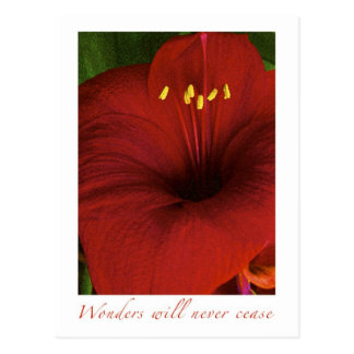 Wonders will never cease postcard