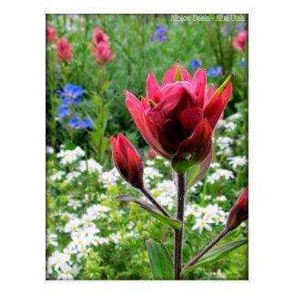 Wondrous Wildflowers - Albion Basin, Utah (#2) Post Card