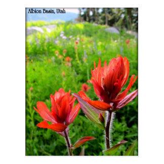 Wondrous Wildflowers - Albion Basin, Utah Postcard