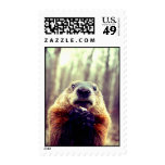 Wonky Marmot Postage