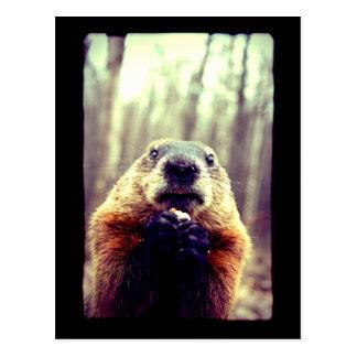 Wonky Marmot Postcard