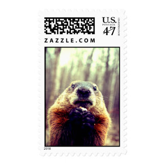 Wonky Marmot Stamp