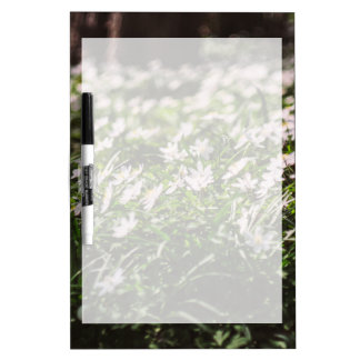 Wood Anemone Flowers Meadow in The Woods Dry-Erase Boards