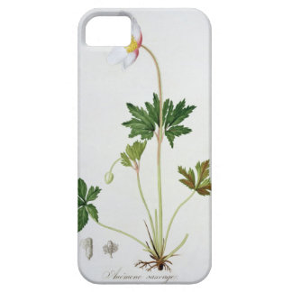 Wood Anemone from 'Phytographie Medicale' by Josep iPhone SE/5/5s Case