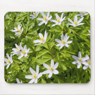 Wood Anemone Mouse Pad