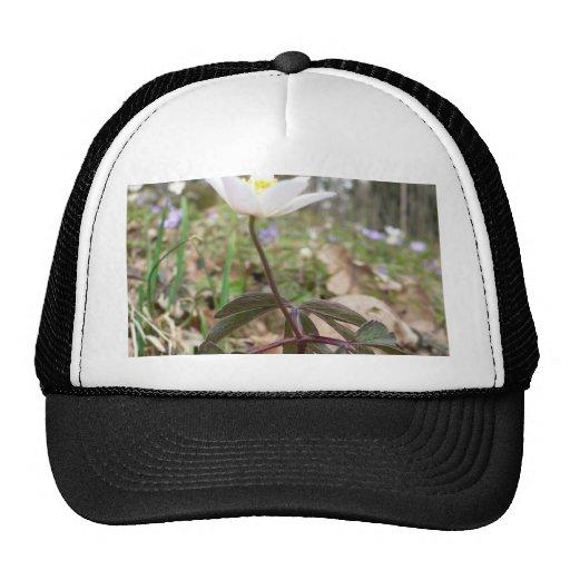 Wood Anemone Trucker Hat